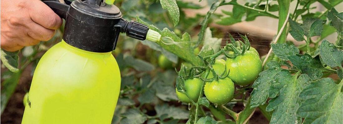 борьба с болезнями на томатах